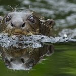 Pantanal: 9 facts you need to know